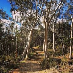 Walk, cycle or drive to the top of Mount Ainslie for a perfect view of Canberra's unique layout. Take in Lake Burley Griffin, many of Canberra's national attractions and the mountain ranges surrounding the city. See great views of the Australian War Memorial, Anzac Parade and Parliament House. Photo by Instagrammer @travellingking1. #visitcanberra