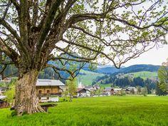 Der Ahornbaum beim Bögrainhof Mansions, House Styles, Plants, Salzburg, Sport, Maple Tree, Tourism, Mountains, Landscape