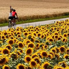 viagem, trip, bike, biketrip,girassol,travel