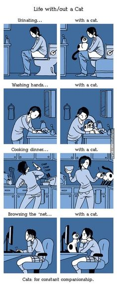 Life with cats