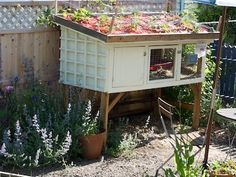 Green Roof on Rabbit Hutch