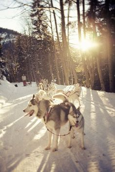 Oh what fun it is to ride in a ten dog open sleigh.
