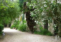 Dans un village viticole du bord de Loire, proche de Saumur, demeure du 19ème S. avec maisons et caves troglodytiques - belles demeures - pays-de-loire - Patrice Besse Châteaux et Demeures de France, agence immobilière spécialisée dans la vente de châteaux, demeures historiques et tout édifice de caractère
