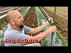 Paradicsom kötözés, karózás Japán módszerrel - YouTube Youtube, Gardening, Decor, Decoration, Lawn And Garden, Decorating, Youtubers, Youtube Movies, Horticulture