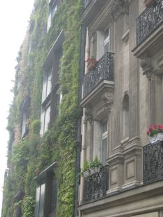 Brownstone with Ivy; Gorgeous.