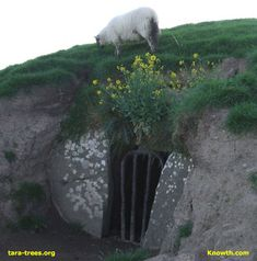 "Hill of Tara dating back to between 2500 B.C. and 3000 B.C ""http://www.knowth.com/tara/tara_lamb.jpg"""