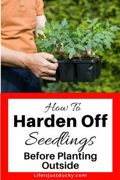 How To Hardening Off Seedlings A Beginners guide for starting a garden and transitioning your indoor seedling for life in your vegetable garden Young plants such as toma. Vegetable Garden Planner, Indoor Vegetable Gardening, Starting A Vegetable Garden, Organic Gardening Tips, Hydroponic Gardening, Aquaponics, Flower Gardening, Container Gardening, Herb Gardening