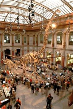 Berlin | Spree Athen. Naturkundemuseum Berlin