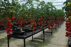 AutoPot™ - PLANT DRIVEN FEEDING AND WATERING SYSTEMS