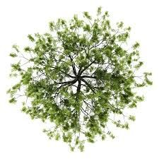 tree outline for plans arial view - Google Search