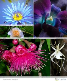Caribbean Tropical Flowers, Plants