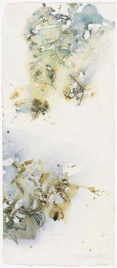 Wawaru – Mimusops elengi by John Wolseley Art Courses, Art Portfolio, Visual Arts, Identity, Illustration Art, Teen, Culture, Artists, Landscape