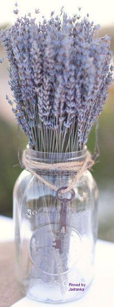 LAVANDER (i want to have a nice smelling plant in the kitchen and lavender is cheap)