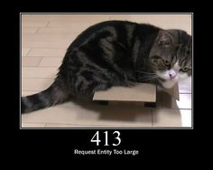 Compare storage unit sizes at Life Storage and see how your belongings will fit inside them. Small, Medium, Large storage units compared, along with other spaces. Storage Unit Sizes, Pet Odor Eliminator, Cat Urine, Pet Odors, Fat Cats, Fat Kitty, Cat Food, Cat Gif, Cat Memes