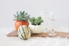 pumpkin-succulent-vase-diy-5.png
