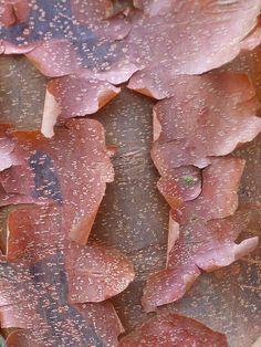 tree bark, photo by victoriaei on flickr