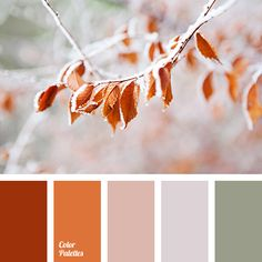 Color Palette #1682