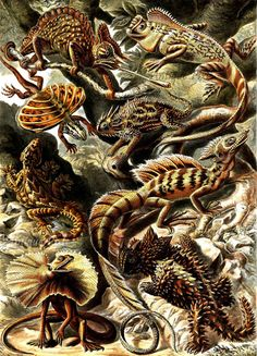 Shop Lacertilia by Ernst Haeckel Vintage Lizard Animals Poster created by Ernst_Haeckel_Art. Personalize it with photos & text or purchase as is! Ernst Haeckel Art, Natural Form Art, Nature Drawing, Nature Illustration, Art Graphique, Alphonse Mucha, Natural History, Art Forms, Graphic Art