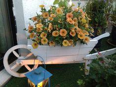 """Petunia i en trillebår på terrassen - Petunia - on the terrace :) """"Margeritten"""" by IJ 24.7.14"""