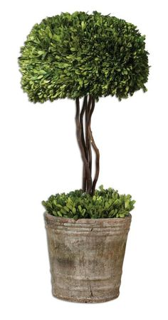 Uttermost 60095 Preserved Boxwood Tree Topiary Green / Mossy Stone Home Decor Accents Statues & Figurines