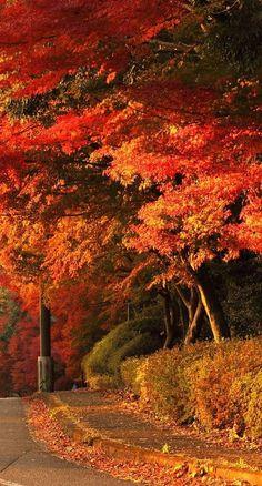 Autumn's Paint Brush - ♔LadyLuxury♔