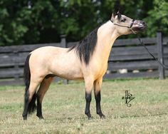 Beautiful horsey that I want in my backyard one day. Maybe.