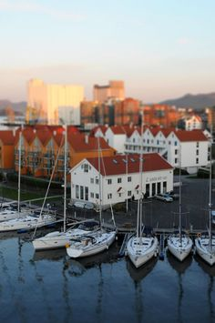 Stavanger Harbour, Rogaland_ Norway Beautiful Places In The World, Wonderful Places, Borealis Lights, Norwegian People, Stavanger Norway, Scandinavian Countries, Countryside, Nature, Donkeys