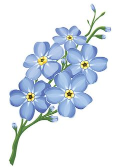 Rama de blue no me olvides flores aisladas - ilustración de arte vectorial