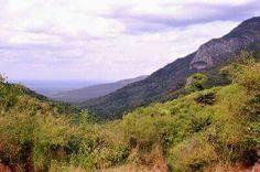 Mathew Ranges-Vegetation