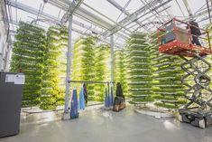 vertical farming...