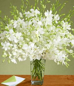 Send deluxe white orchids and other tropical flowers from ProFlowers