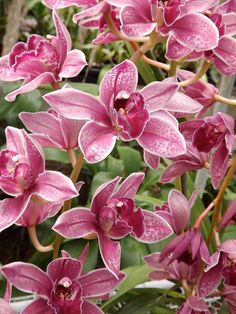 Wonderful ! / Orchid / Orchis