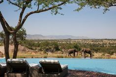"""The term """"safari"""" conjures images of jeeps and jungles, but you won't need to trek far from this hot. - Four Seasons Safari Lodge Serengeti Hotel Swimming Pool, Amazing Swimming Pools, Best Swimming, Hotel Pool, Infinity Pools, Bali, Four Seasons Hotel, Piscina Do Hotel, Luxury Family Holidays"""
