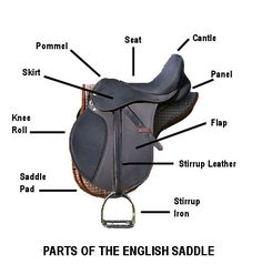Parts of the English Saddle. Royal Grove Stables Blog: SADDLE FITTING ~ HOW TO FIT AN ENGLISH SADDLE CORRECTLY