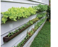 Rain gutter salad garden
