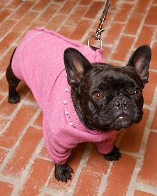 Transform a wool cardigan into a charming dog coat -- your furry friend will enjoy the extra warmth.