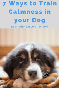 Dog Training Methods, Dog Training Techniques, Puppy Training Tips, Training Your Puppy, Brain Training, Training Dogs, Potty Training, Dog Aggression Training, Obedience Training For Dogs