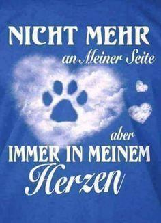 19146171 1116069051827008 5097928343018212329 N Jpg 480 665 Katzenspruche Trauer Um Hund Ich Bin Immer Fur Dich Da