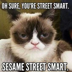 The Official Grumpy Cat Funny Animal Memes, Funny Animal Pictures, Funny Cats, Funny Animals, Cute Animals, Animal Humor, Funny Memes, Funny Quotes, Grumpy Cat Quotes