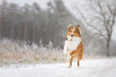 Snownut by Anna Lena Wöhrer - Photo 135311843 - Dream Photography, Animal Photography, Animal Action, Corgi, Frozen, Anna, Dreams, Portrait, Animals