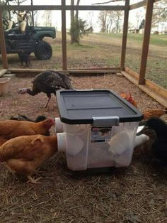 Brilliant feed bin idea. No scrapping around or wasted feed on the floor. And the feed stays dry in the rain.