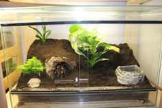 16 Best Terrarium Images Reptiles Terrariums Tarantula Enclosure