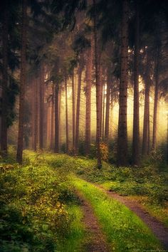 Mystic forest in Vogtland Saxony, Germany.  Go to www.YourTravelVideos.com or just click on photo for home videos and much more on sites like this. Forests, Paths, Pathway, Tree, Germany Travel, Road, Place, Light, Mystic Forest