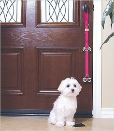 How to Potty Train Your Puppy via The Vintage Modern Wife use bell to train dog to tell you, they have to go