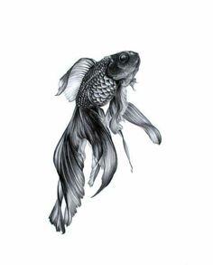Tatoo Knöchel - Spiders Tutorial and Ideas Fish Drawings, Art Drawings Sketches, Beta Fish Drawing, Tattoo Wallpaper, Goldfish Tattoo, Abstrakt Tattoo, Art Aquarelle, Fish Print, Ink Art