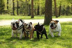 """NHS"" Bulldogs - Fight, Bulldogs, Fight, Bulldogs Fight!"