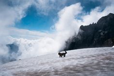 Above the Clouds - The best days are spent exploring above the clouds with a furry companion. :)