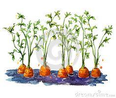 Fresh organic carrots growing in soil