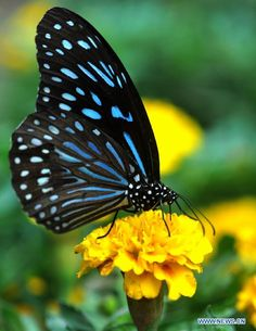 *Blue and Yellow . What a combination of colors. Only God can mix and match colors so beautiful...