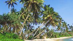 Erleben Sie 9 Tage Sri Lanka inkl. Flug & Hotel ab nur 655,-€